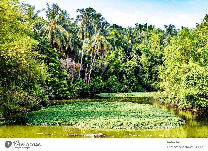 natürlichkeit Ferien & Urlaub & Reisen Tourismus Ausflug Abenteuer Ferne Freiheit Natur Landschaft Baum Sträucher Blatt Palme Urwald Flussufer außergewöhnlich