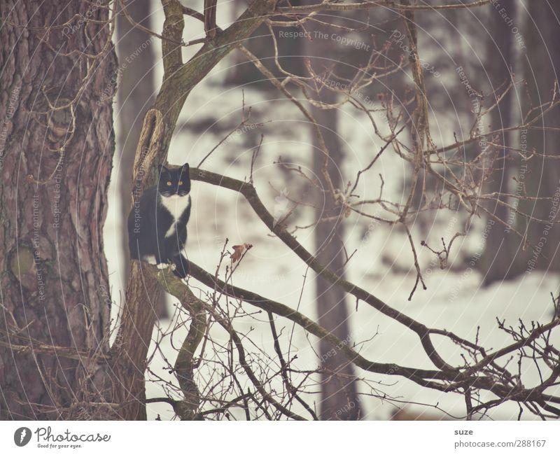 I'm like a bird Umwelt Natur Winter Baum Tier Haustier Katze 1 sitzen außergewöhnlich kalt lustig trist braun tierisch Ast Zweige u. Äste Baumkrone Farbfoto
