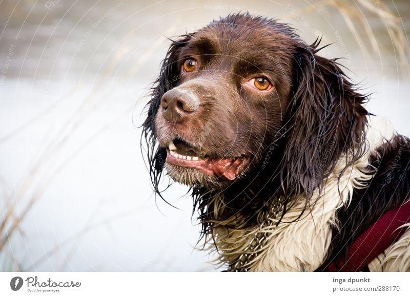 Freischwimmer Hund Natur Tier Umwelt kalt Sport Spielen Schwimmen & Baden Freizeit & Hobby nass Abenteuer Tiergesicht Flussufer Haustier toben Jagdhund