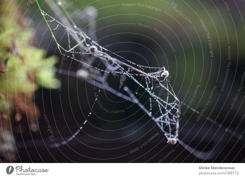 Altweibersommer Natur fliegen glänzend hängen dünn natürlich weich Bewegung Netzwerk Vergänglichkeit Spinnennetz Indian Summer Herbst Tau Schnur stoppen