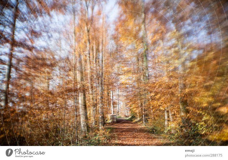 wannabe lensbaby II Umwelt Natur Landschaft Herbst Pflanze Baum Wald natürlich gelb gold Laubwald Farbfoto Außenaufnahme Menschenleer Tag Unschärfe