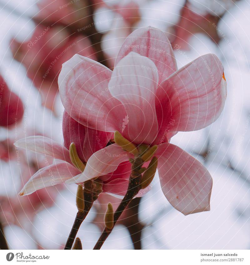 Natur Sommer Pflanze Blume Winter Herbst Frühling Garten rosa Dekoration & Verzierung Romantik Beautyfotografie Blütenblatt zerbrechlich geblümt
