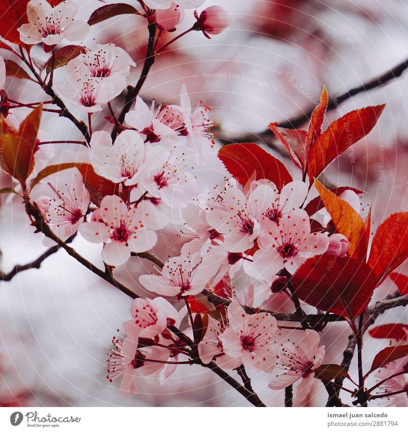 rosa Blütenpflanze im Frühjahr Blume Blütenblatt Pflanze Garten geblümt Natur Dekoration & Verzierung Romantik Beautyfotografie zerbrechlich Hintergrund