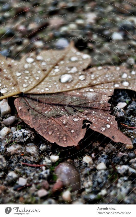 Abgestürzt Umwelt Natur Pflanze Erde Sand Wasser Wassertropfen Herbst schlechtes Wetter Regen Baum Blatt Wald Straße Wege & Pfade fallen liegen kalt nass braun