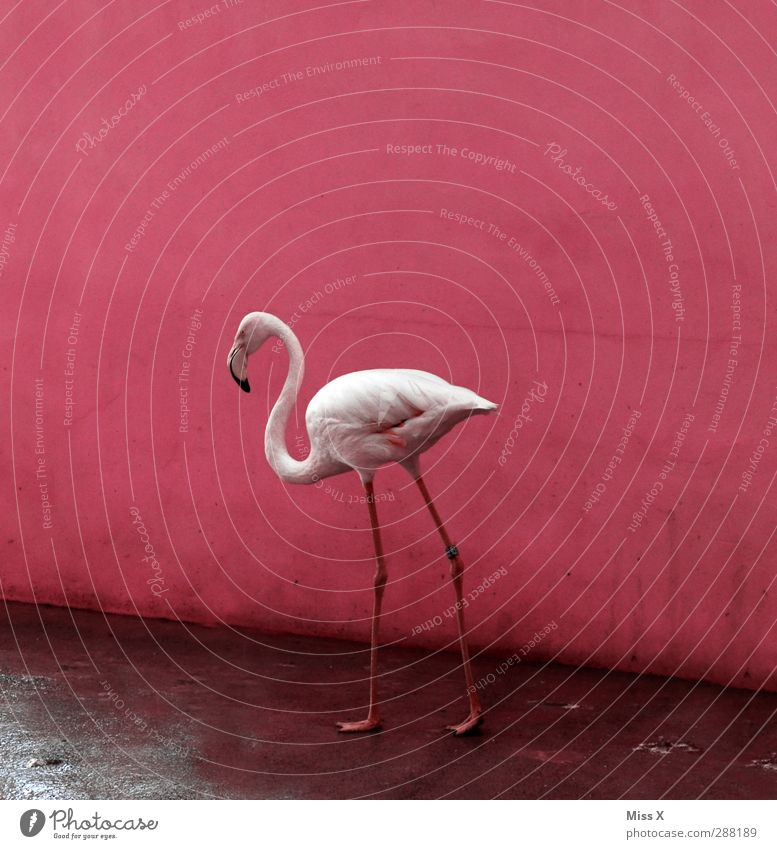 Flamgomin Tier Vogel rosa Flamingo