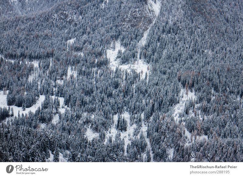 den wald vor lauter bäumen nicht sehen Umwelt Natur Landschaft Wald Alpen trist blau braun schwarz weiß Engadin Schneefall Muster Nadelwald Berge u. Gebirge