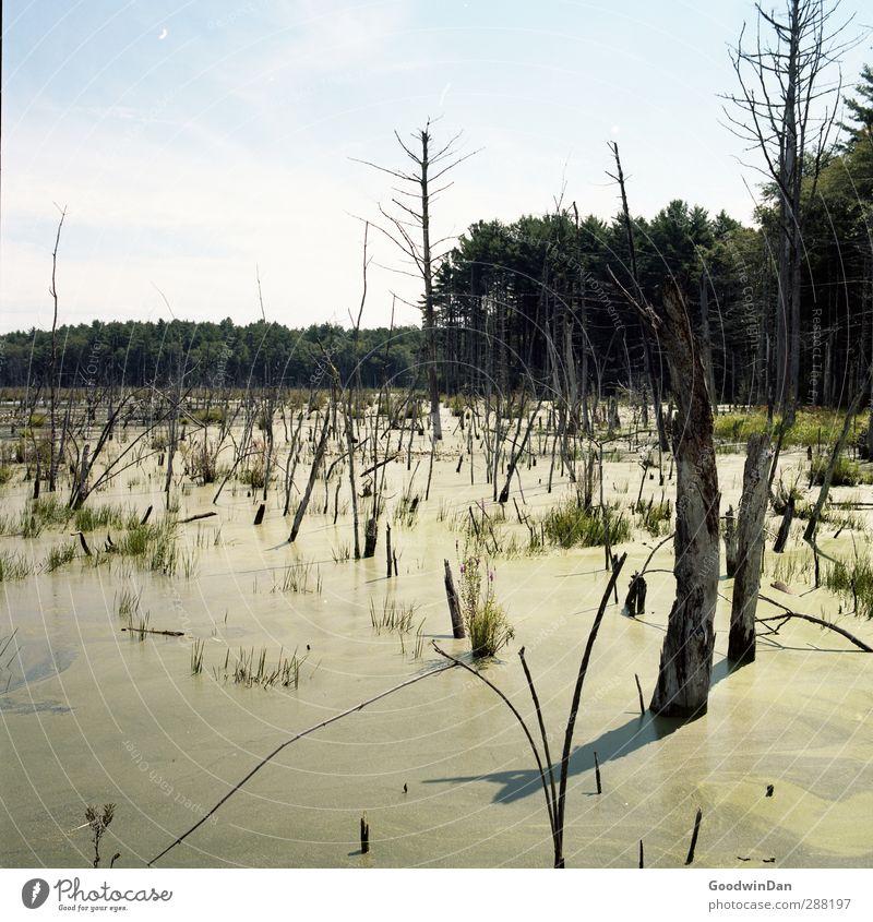 Durch die Sümpfe. Natur Wasser Wald Umwelt Wetter dreckig authentisch Schönes Wetter Urelemente viele Fluss Sumpf Moor