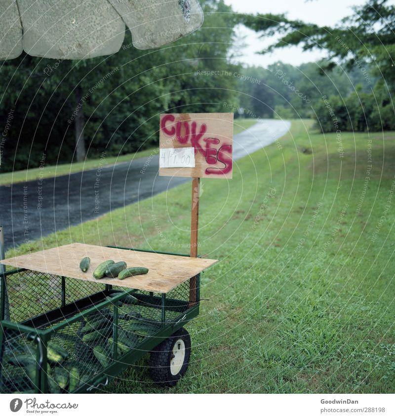 Sonderangebot! Cukes, 4 für 1 Dollar!! Umwelt Natur Herbst Wetter Schönes Wetter strassenverkauf Gurke verkaufen Aktion sonderangebot Armut außergewöhnlich