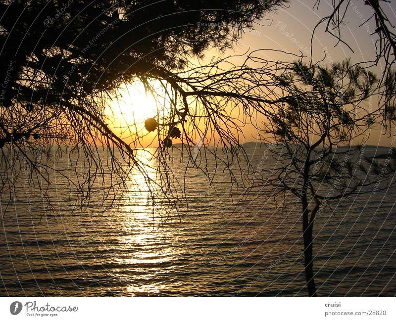 Sonne Sonnenuntergang Meer Horizont Pinie Wasser