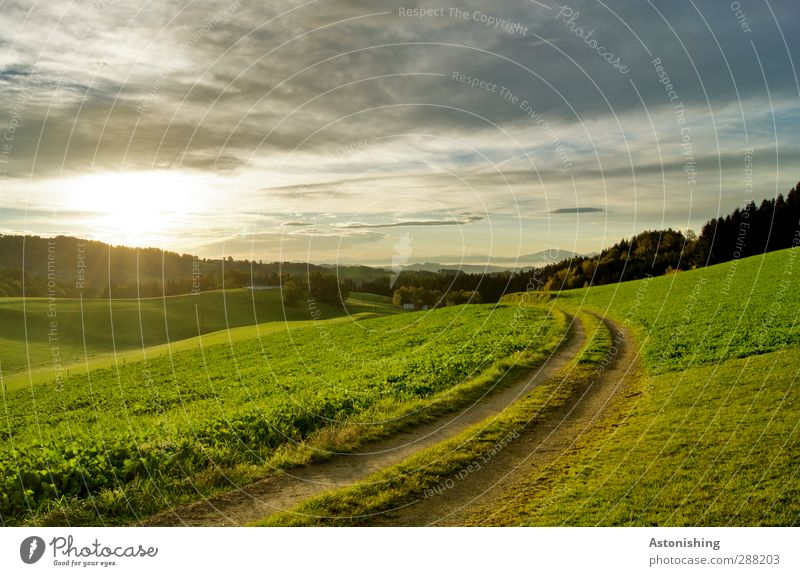 in den Tag hinein Himmel Natur grün Sommer Pflanze Baum Sonne Wolken Landschaft Wald Umwelt Wiese Wärme Gras Wege & Pfade Luft