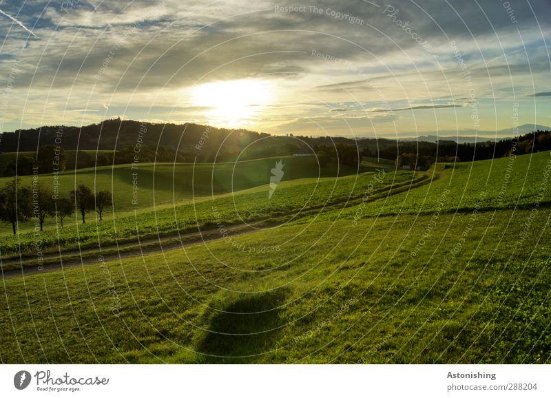 am Morgen Umwelt Natur Landschaft Pflanze Himmel Wolken Sonne Sonnenaufgang Sonnenuntergang Sonnenlicht Sommer Wetter Schönes Wetter Baum Gras Moos Wiese Feld