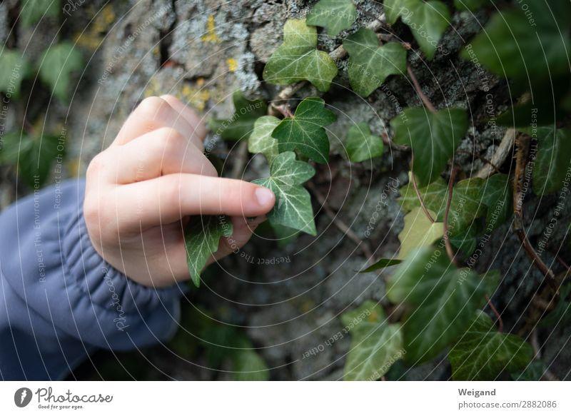 Efeu harmonisch Wohlgefühl Zufriedenheit Sinnesorgane Erholung ruhig Meditation Kindergarten Mädchen Junge 1 Mensch 3-8 Jahre Kindheit Pflanze Baum machen Natur