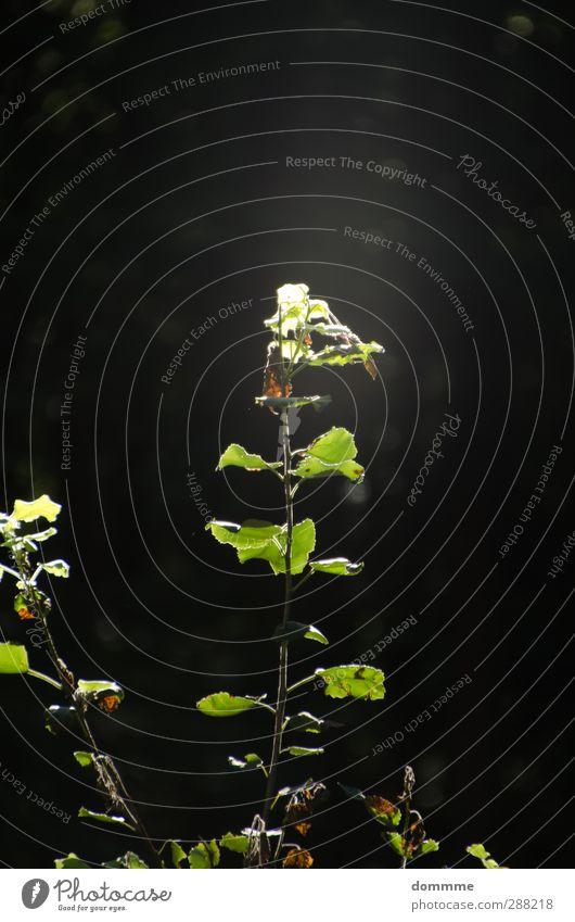 Kraft der Sonne Natur Pflanze Baum Sonne Wald Umwelt Leben Frühling Gesundheit Stimmung glänzend Wachstum frisch Beginn leuchten Schönes Wetter