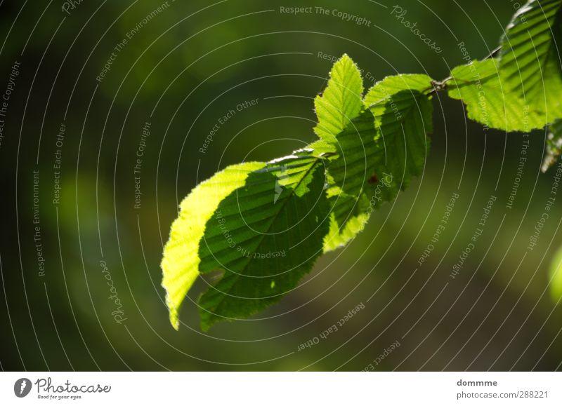 Frisch und saftig... Sommer Sonne Umwelt Natur Tier Sonnenlicht Frühling Schönes Wetter Pflanze Baum Blatt Grünpflanze Wachstum ästhetisch authentisch frisch