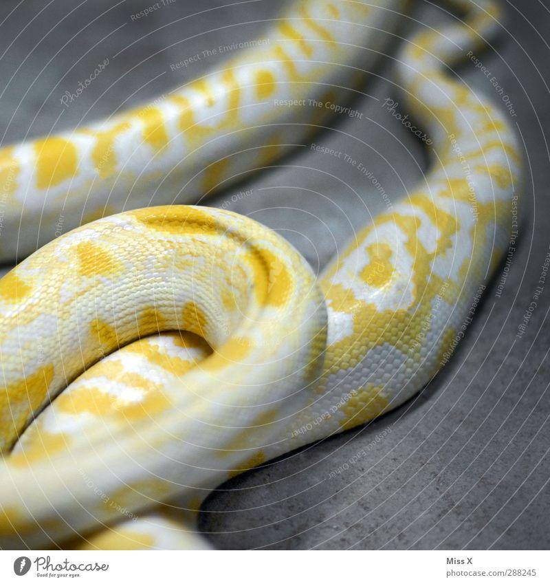 Neue Handtasche Tier gelb gefährlich Schlange Schuppen Schlangenhaut Boas Schlangenleder