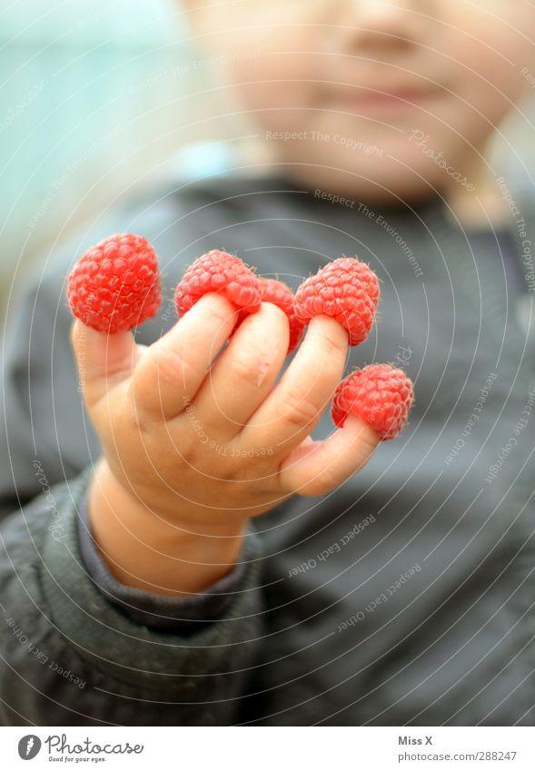 Himbeerfinger Lebensmittel Frucht Ernährung Essen Mensch Kind Kleinkind Hand Finger 1 1-3 Jahre 3-8 Jahre Kindheit lecker niedlich süß rosa Himbeeren Farbfoto
