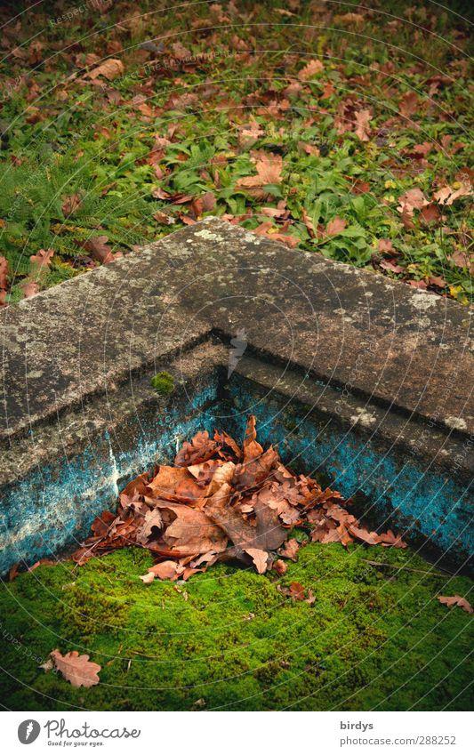 Rückeroberung Herbst Moos Herbstlaub alt authentisch historisch Originalität ruhig Nostalgie Wandel & Veränderung Zeit Laubhaufen Ecke Natur Farbfoto