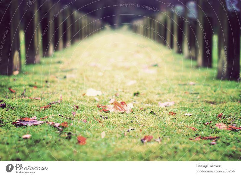 R.I.P. II alt Blatt dunkel Wiese Herbst Tod Traurigkeit stehen Hoffnung Vergänglichkeit Trauer Glaube Vergangenheit Herbstlaub Friedhof Grab