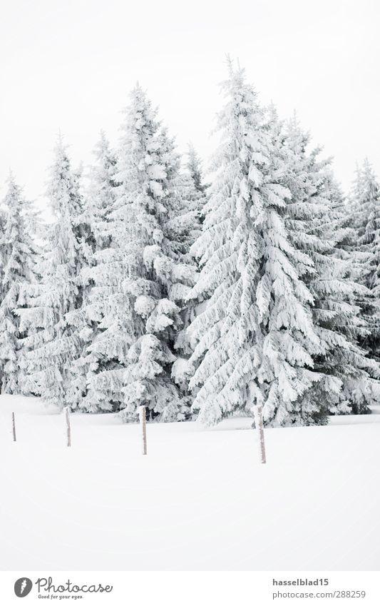 Winter in Thüringen 2 ruhig Schnee Winterurlaub Berge u. Gebirge Landschaft Schneefall Baum Feld Wald Gipfel kalt Tanne Fichte Weihnachtsbaum Märchen