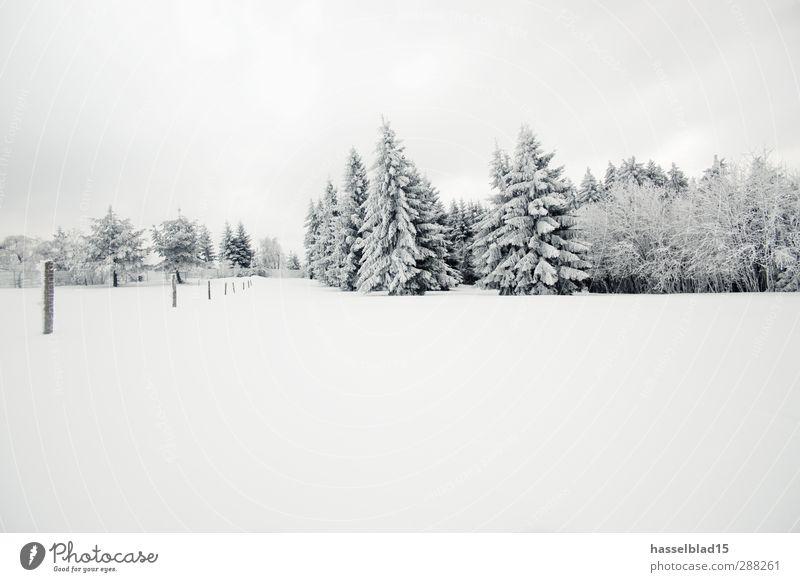 Winter in Thüringen 3 ruhig Schnee Berge u. Gebirge Umwelt Landschaft Klima Klimawandel Eis Frost Schneefall Baum Feld Wald kalt Tanne Märchen Märchenwald