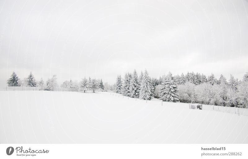 Winter in Thüringen 4 ruhig Landschaft Wald kalt Berge u. Gebirge Schnee Schneefall Tanne Märchen Fichte Märchenwald Waldrand Wintertag