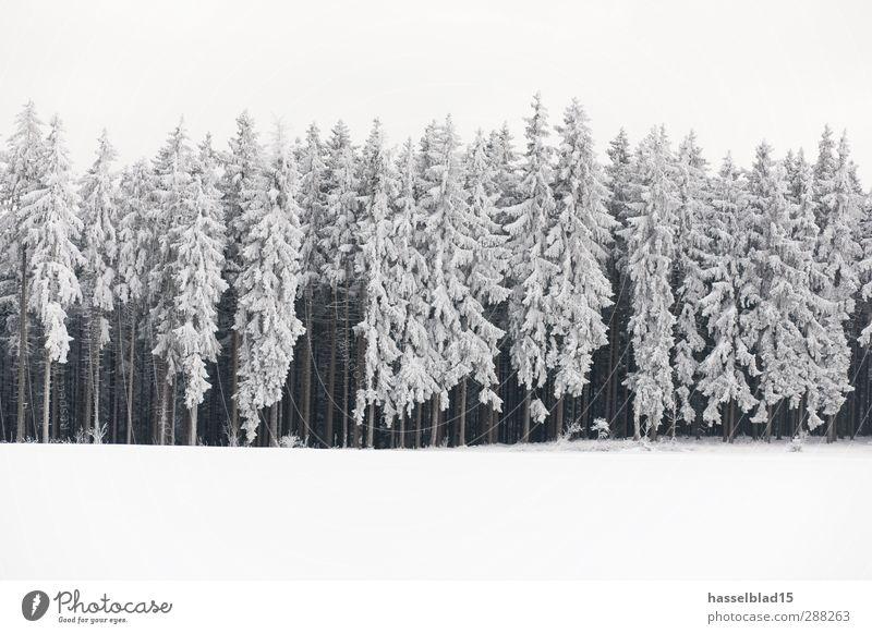 Winter in Thüringen 5 Erholung ruhig Berge u. Gebirge Landschaft Pflanze Schnee Schneefall Feld Wald kalt Tanne Fichte Märchen Märchenwald Gedeckte Farben