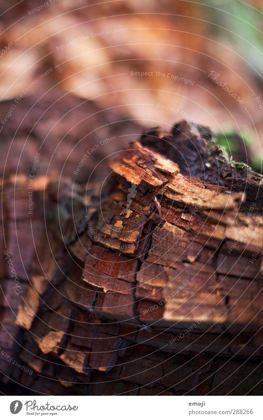 pattern Natur Baum Umwelt Herbst Holz braun natürlich Baumrinde