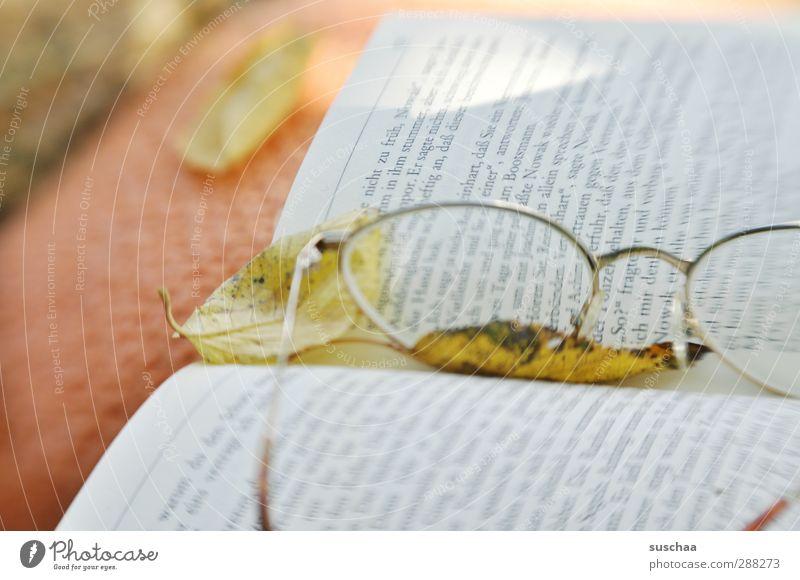 lesezeit II Natur ruhig Umwelt Herbst Zufriedenheit Idylle lesen Vorsicht