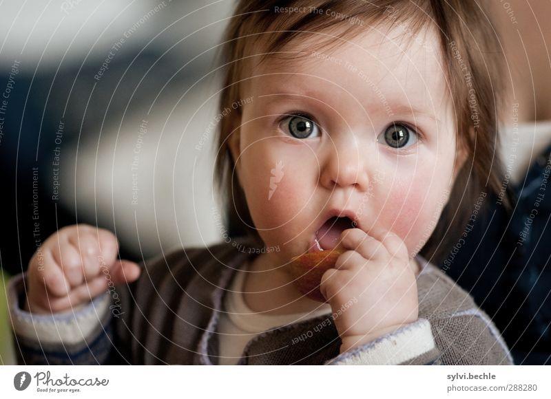 Kleinkind entdeckt die Welt, Apfel essen Lebensmittel Frucht Ernährung Essen Bioprodukte Vegetarische Ernährung Fingerfood Gesundheit Gesunde Ernährung