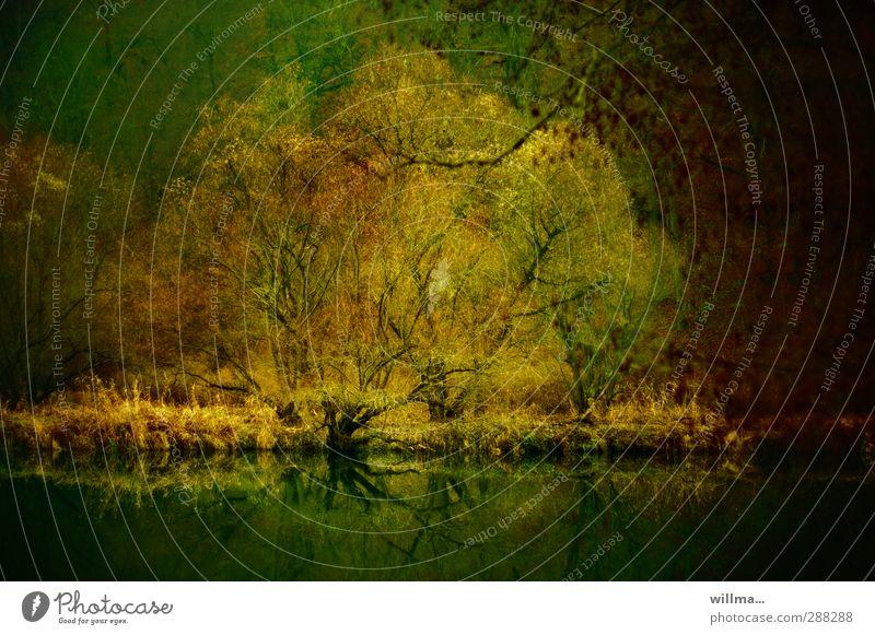 muldentalromantik Natur Baum Landschaft dunkel Herbst Fluss Romantik Flussufer