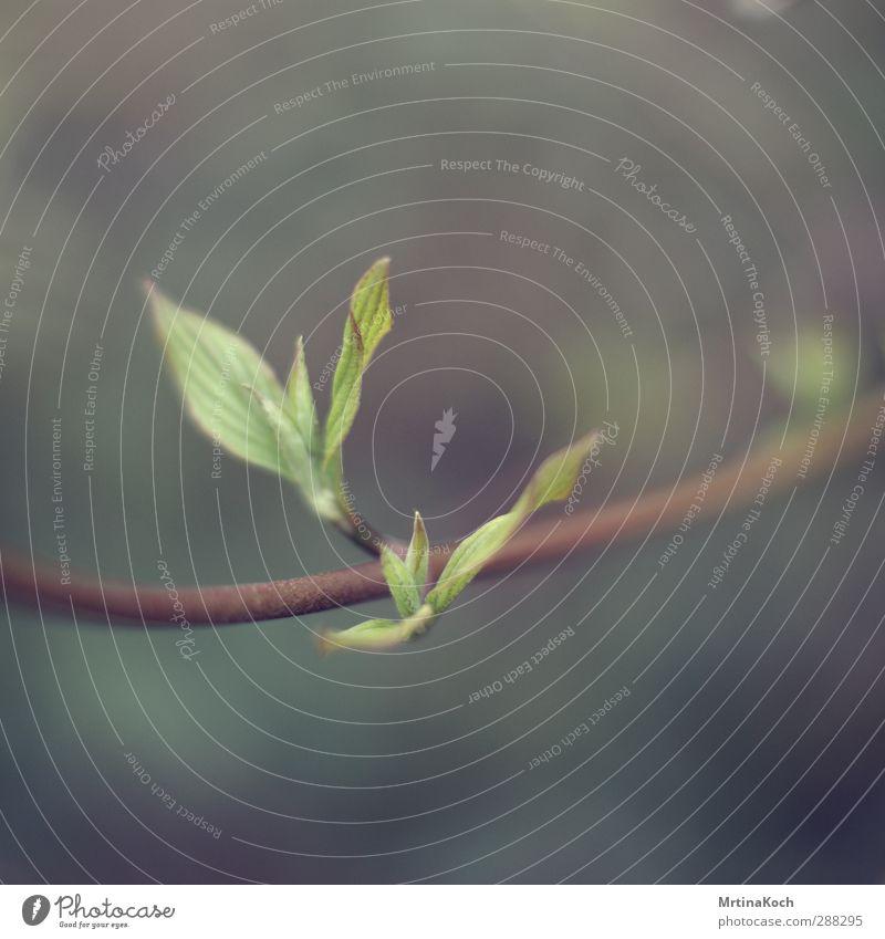 sleep. Frühling Sommer Pflanze Sträucher Blatt Grünpflanze Natur Neugier grün frisch aufwachen Frühlingsgefühle Farbfoto Gedeckte Farben mehrfarbig