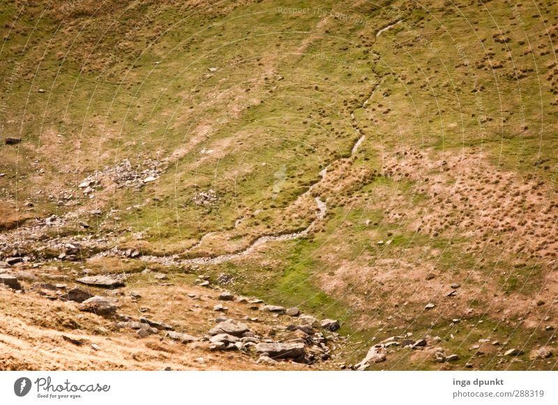 Tal abwärts Umwelt Natur Landschaft Pflanze Gras Berge u. Gebirge Schlucht Bach Rumänien Karpaten Ferien & Urlaub & Reisen Wege & Pfade Wildbach kalt Farbfoto