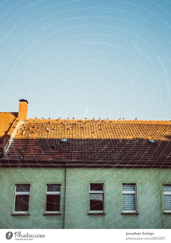 Tauben auf einem Hausdach in Erfurt Stadt Bauwerk Gebäude Architektur Tier Vogel Tiergruppe Schwarm hässlich Taubenkot Dach Thüringen Fassade Schornstein