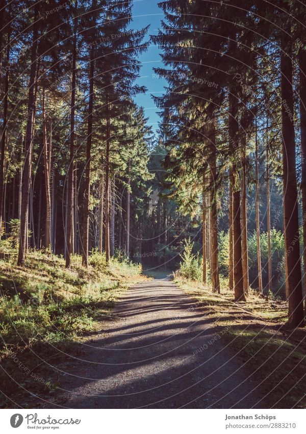 Waldweg mit Licht und Schatten Natur schön Landschaft Baum Erholung Umwelt Wege & Pfade ästhetisch laufen Zukunft Fußweg Spaziergang Hoffnung Spazierweg