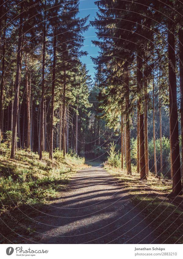 Waldweg mit Licht und Schatten Umwelt Natur Landschaft ästhetisch schön waldbaden Baum Nadelbaum Fußweg Wege & Pfade Spaziergang Spazierweg Erholung