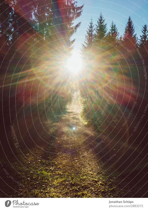 Sonnenlicht im Wald Natur schön Landschaft Baum Erholung Umwelt Wege & Pfade ästhetisch Fußweg Spaziergang Sonnenbad blenden Nadelbaum Blendenfleck