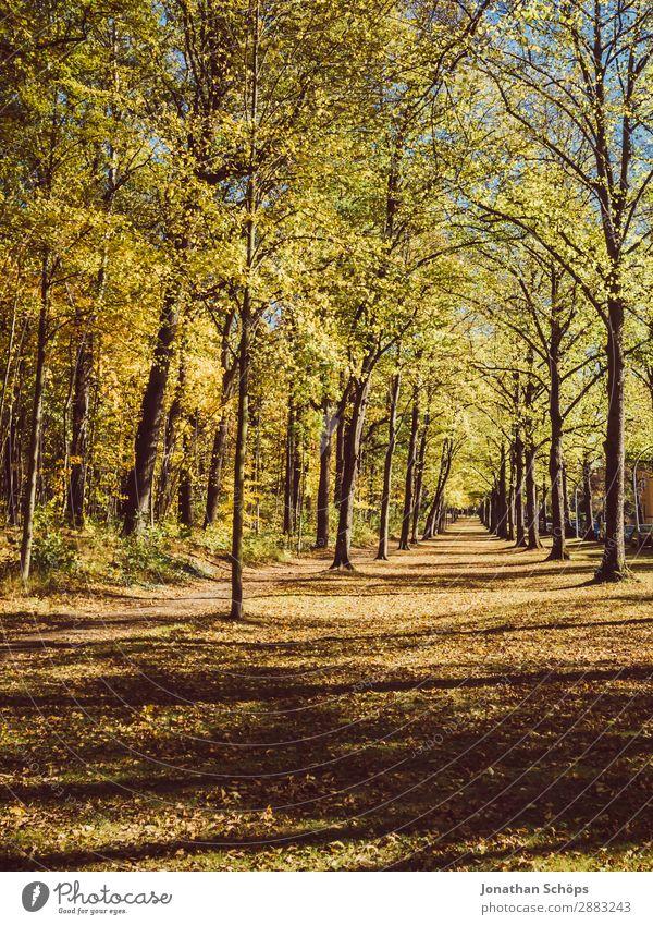 Allee im Herbst im Küchwald, Chemnitz Umwelt Natur Landschaft Klima Wetter Wald ästhetisch Deutschland Fußweg Wege & Pfade Aussicht geradeaus Baum Blatt Wiese