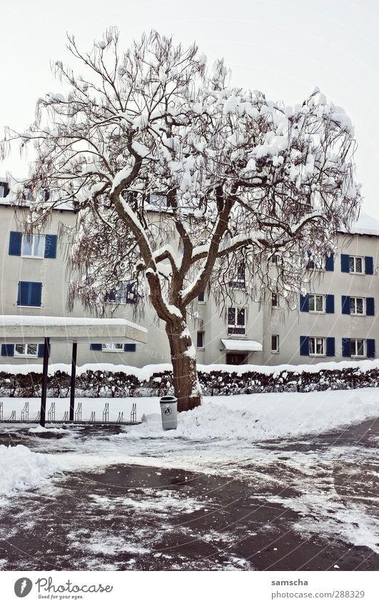 winterlich II Haus Umwelt Natur Pflanze Winter Eis Frost Schnee Baum Stadt Gebäude frieren Häusliches Leben kalt weiß Winterstimmung Winterdienst Wintertag