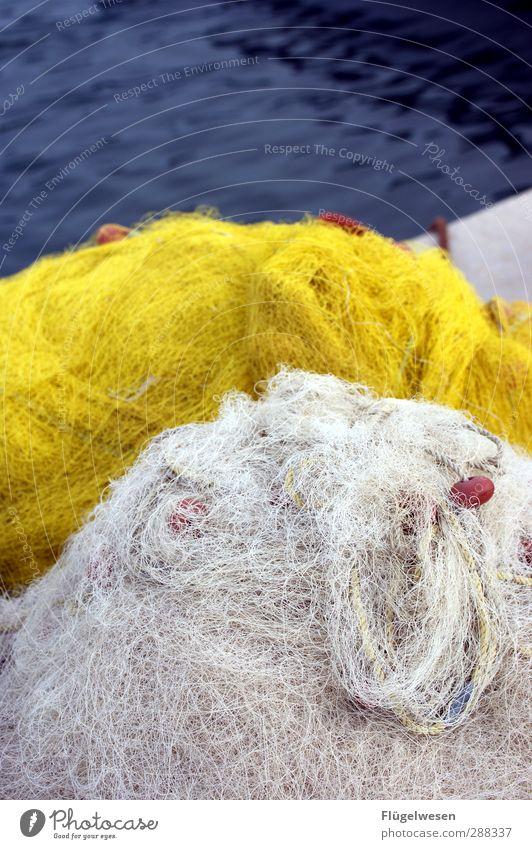 Der Tag beginnt Lebensmittel Fisch Meeresfrüchte Ernährung Essen Frühstück Mittagessen Sushi Asiatische Küche Küste Nordsee Ostsee Schwimmen & Baden Jagd