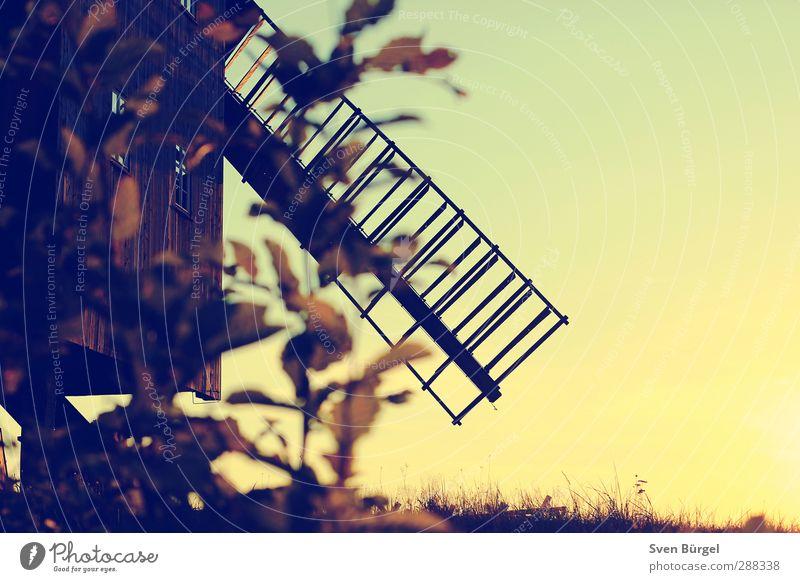 Windmühle im Sonnenuntergang Ferien & Urlaub & Reisen Tourismus Ausflug Sightseeing Museum Architektur Kultur Natur Landschaft Wolkenloser Himmel Sonnenaufgang