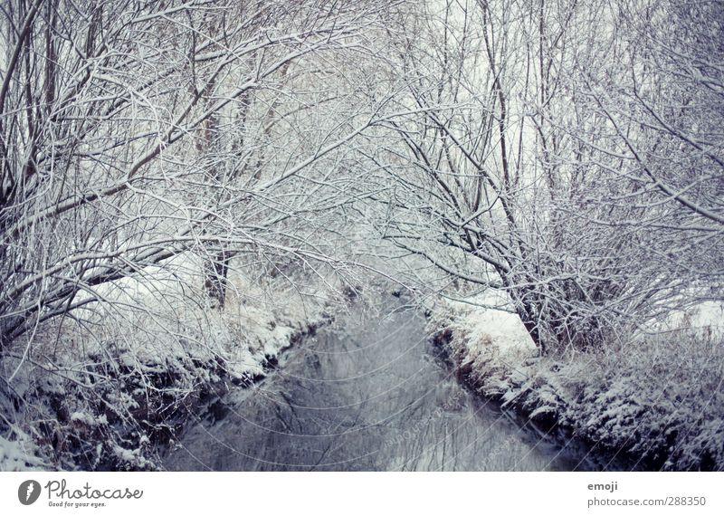 still Natur blau weiß Baum ruhig Winter Wald Umwelt kalt Schnee Eis natürlich Sträucher Fluss Bach