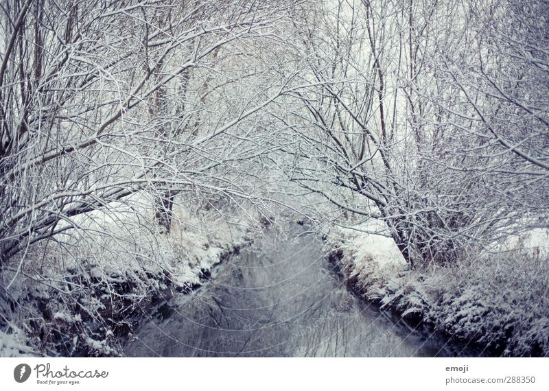still Umwelt Natur Winter Schnee Baum Sträucher Wald Bach Fluss kalt natürlich blau weiß ruhig Eis Farbfoto Gedeckte Farben Außenaufnahme Menschenleer Tag