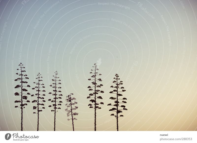 | | | \ | | Himmel Natur blau Sommer Pflanze Baum Landschaft schwarz gelb Umwelt Küste Blüte Luft gold Schönes Wetter Sträucher