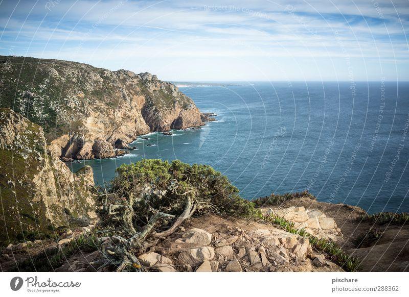 ziemlich westlich Landschaft Sommer Schönes Wetter Sträucher Küste Meer eckig schön Fernweh Freiheit Natur Ferne Portugal Farbfoto Außenaufnahme Menschenleer