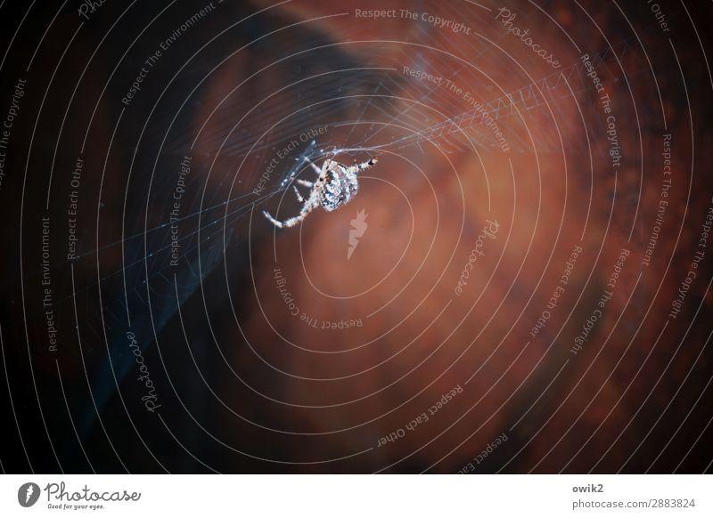 Diogenes Pflanze Tier ruhig Denken Metall warten nah Meditation Rost Wachsamkeit hängen Kontrolle Ekel geduldig Spinne achtsam