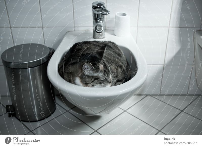 Wie die Faust aufs Auge! Katze weiß Tier ruhig schwarz Erholung grau Innenarchitektur liegen Wohnung schlafen Coolness Bad Fliesen u. Kacheln dick Haustier