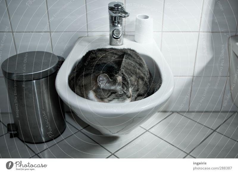 Wie die Faust aufs Auge! Toilettenpapier Wohnung Innenarchitektur Bad Bidet Müllbehälter Fliesen u. Kacheln Wasserhahn Tier Haustier Katze 1 liegen schlafen