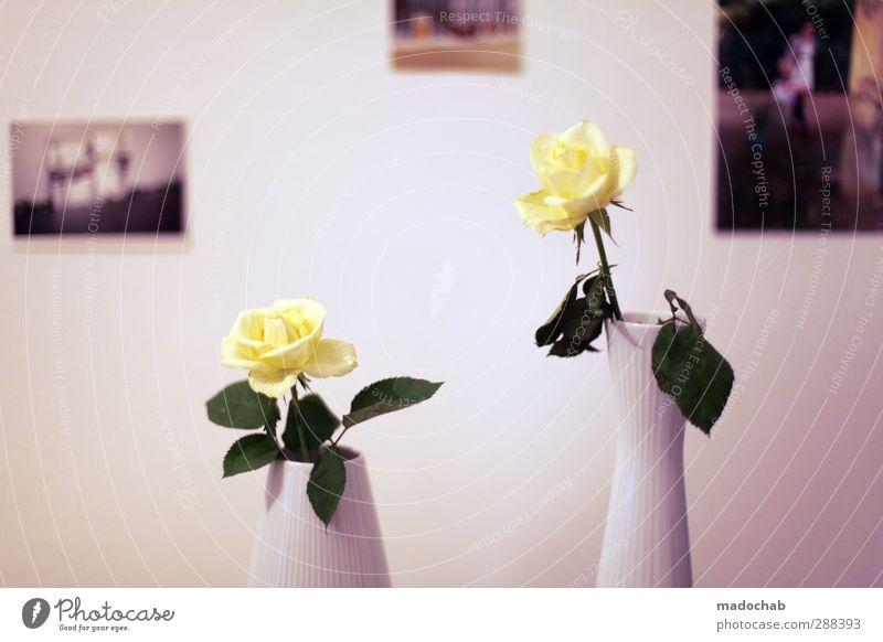Roses are red - Romantik Kitsch Rose Einrichtung Zuhause Lifestyle elegant Stil Design schön Wellness harmonisch Wohlgefühl Zufriedenheit Sinnesorgane Erholung