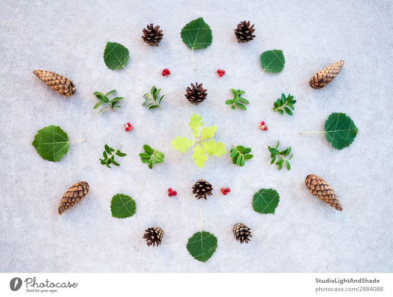 Sammlung von Sommerwaldpflanzen Natur Pflanze Urelemente Baum Blatt Wald Stein Beton natürlich wild braun grau grün Farbe Kreativität Ordnung Symmetrie Tanne