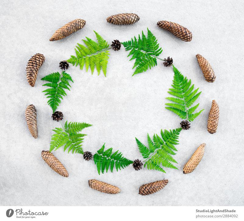 Runder Rahmen aus Nadelbäumen und Wildfarn Design Sommer Natur Pflanze Blatt Wald Stein Beton modern natürlich wild grau grün Farbe Wurmfarn Borte skandinavisch